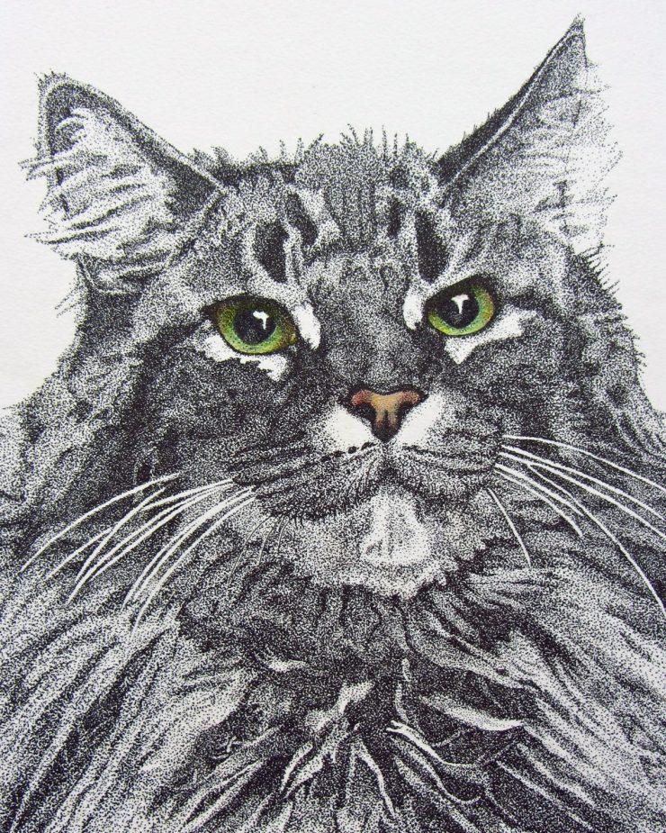 Shasta Cat