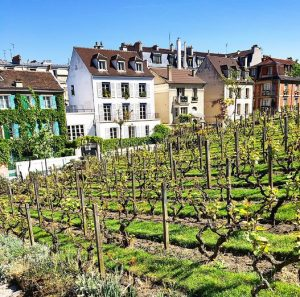 Clos Montmartre