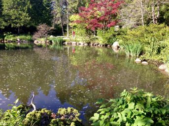 Japanese Pond & Garden
