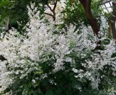 Beautiful White Plant