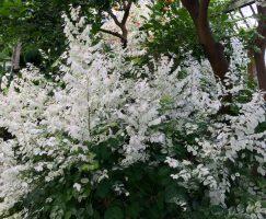 Beautiful White Plant