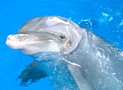 Winter the Dolphin, Clearwater, Florida