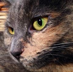 Zoe Green Eyes